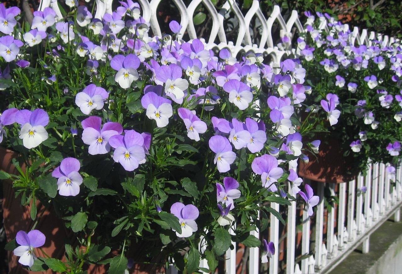 Quelle matière choisir pour la clôture de sa maison ?
